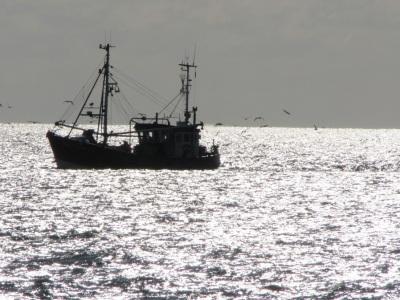 Krabbenkutter Wattenmeer Möwen Fotoapparat