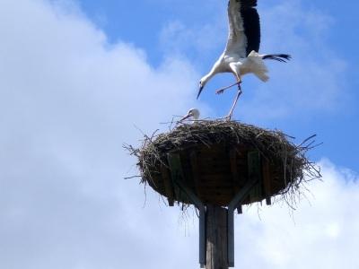 Landung Storch Nest