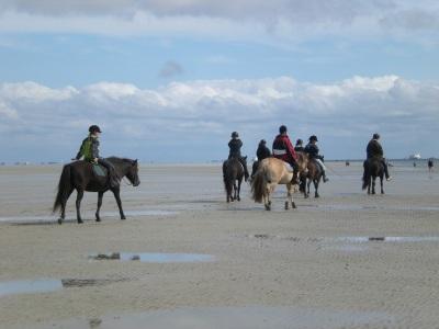 Pferd Wattenmeer reiten