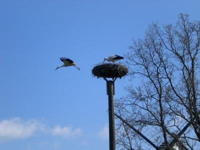 Stoerche Nest Abflug