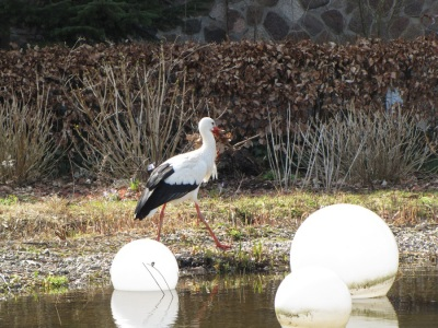 Storch Material Nestbau