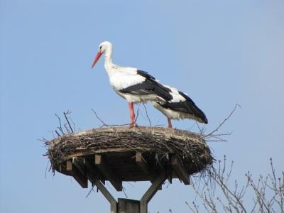 Storch Nest Mühlenpark